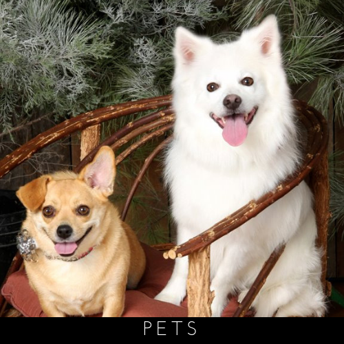 Click here to explore our pet photography services
